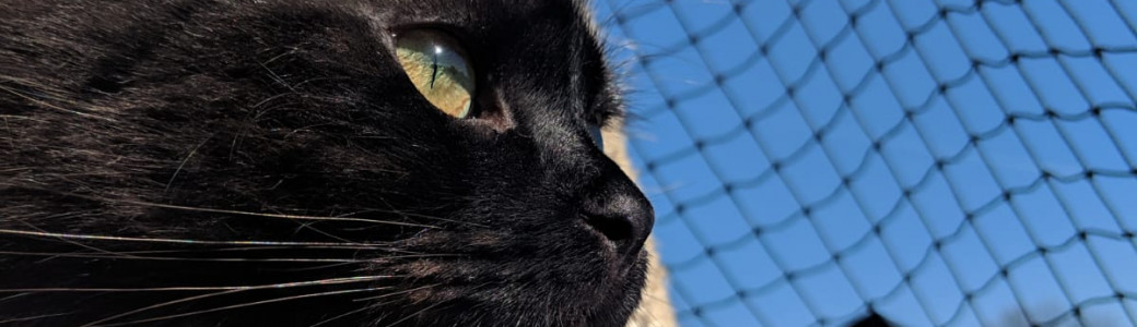 Katzenhilfe Rußland